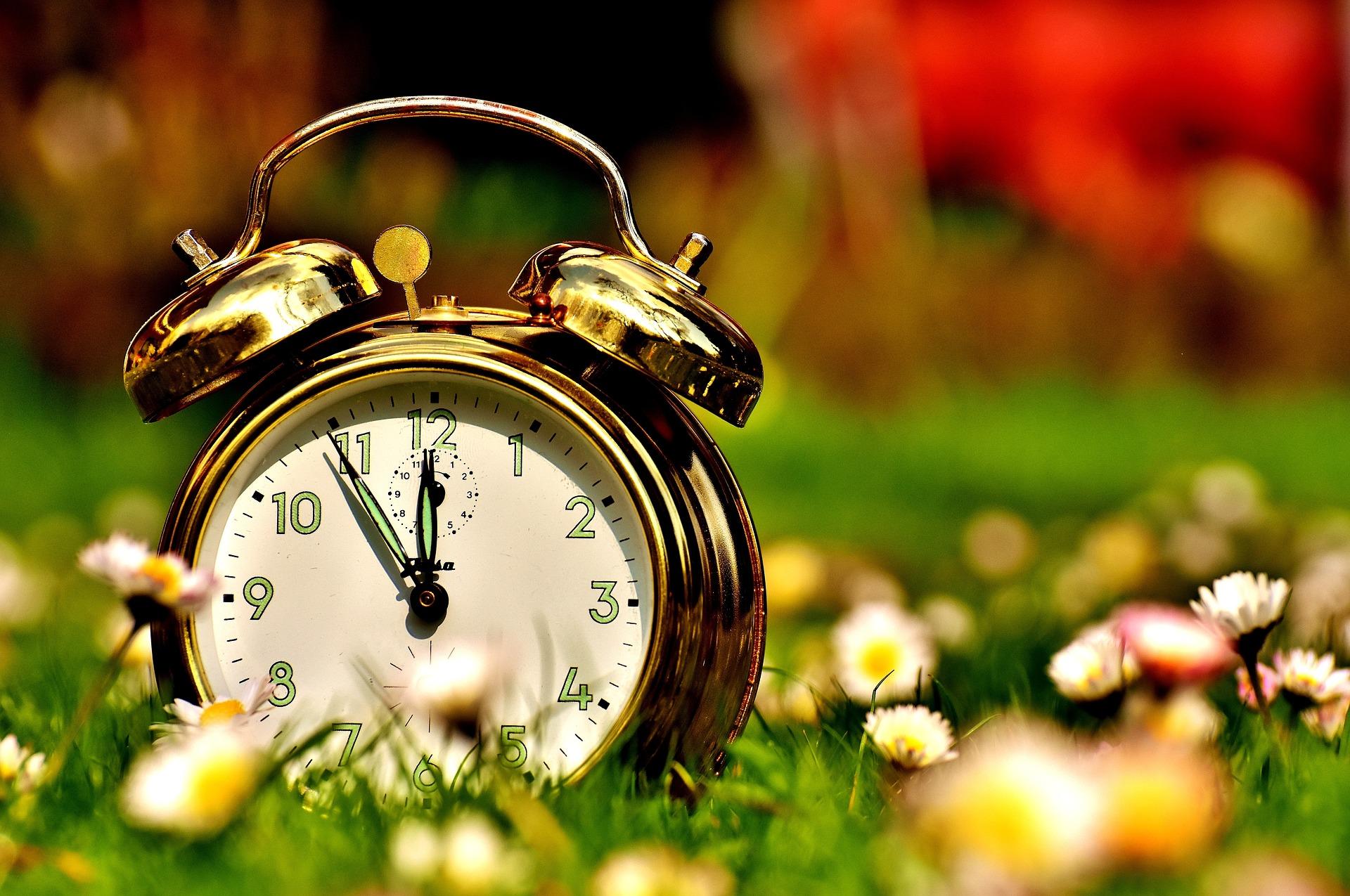 Alarm clock sitting in a meadow
