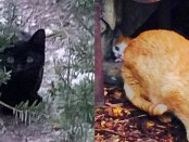 Left: a black cat; right: a feral cat with kitten