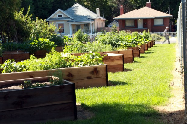 Full planter boxes at South City