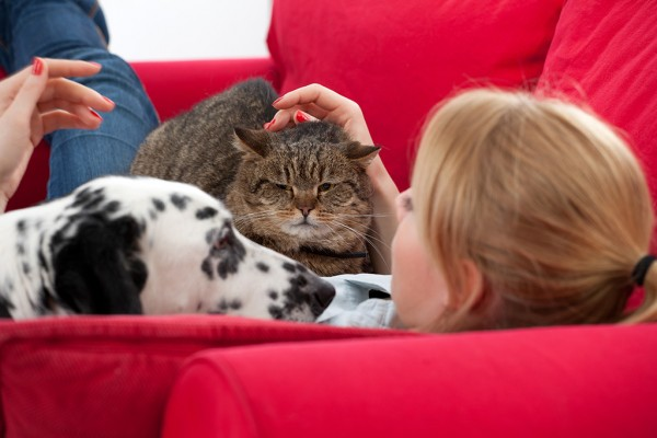 Woman relaxing with a dog and cat