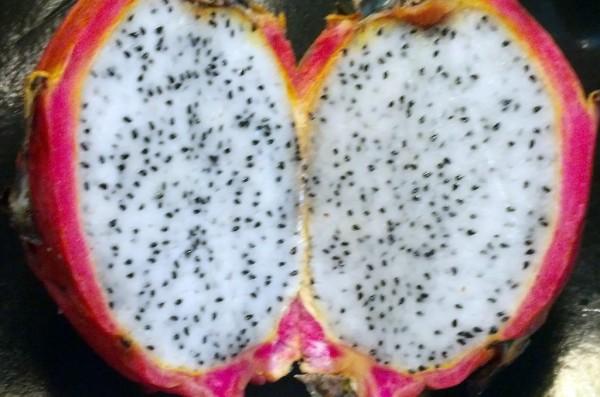 Inside the dragon fruit.