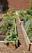 SLCC Community Garden