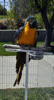 Rescue parrot