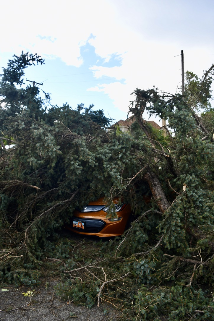 Large spruce tree blankets orange car