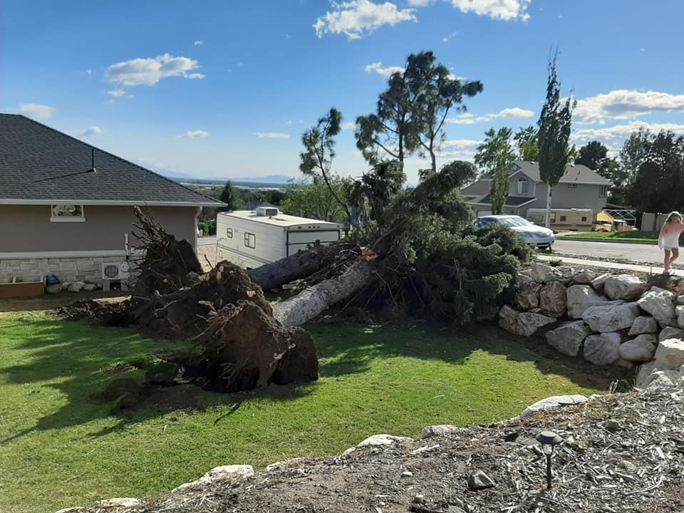 Large trees uprooted from backyard