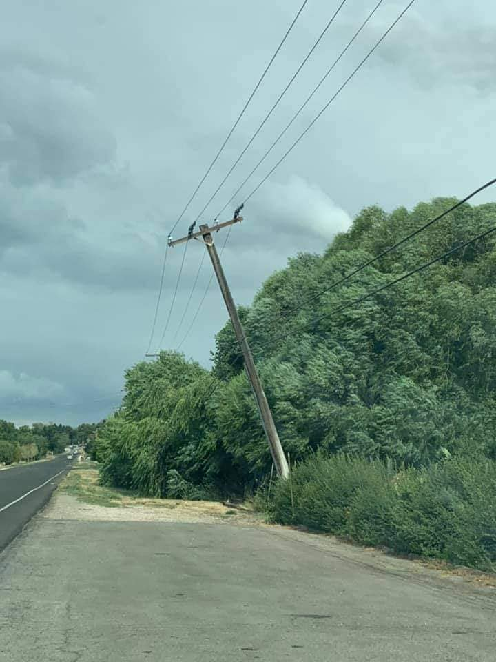 Trees pull down power line