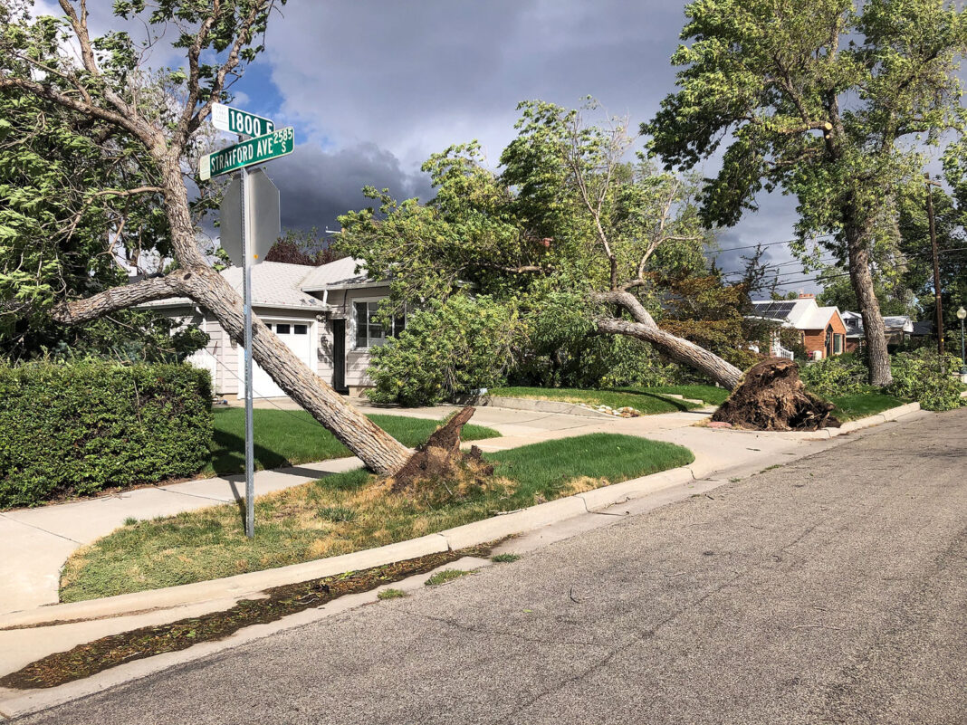Two uprooted trees, one landed on a house
