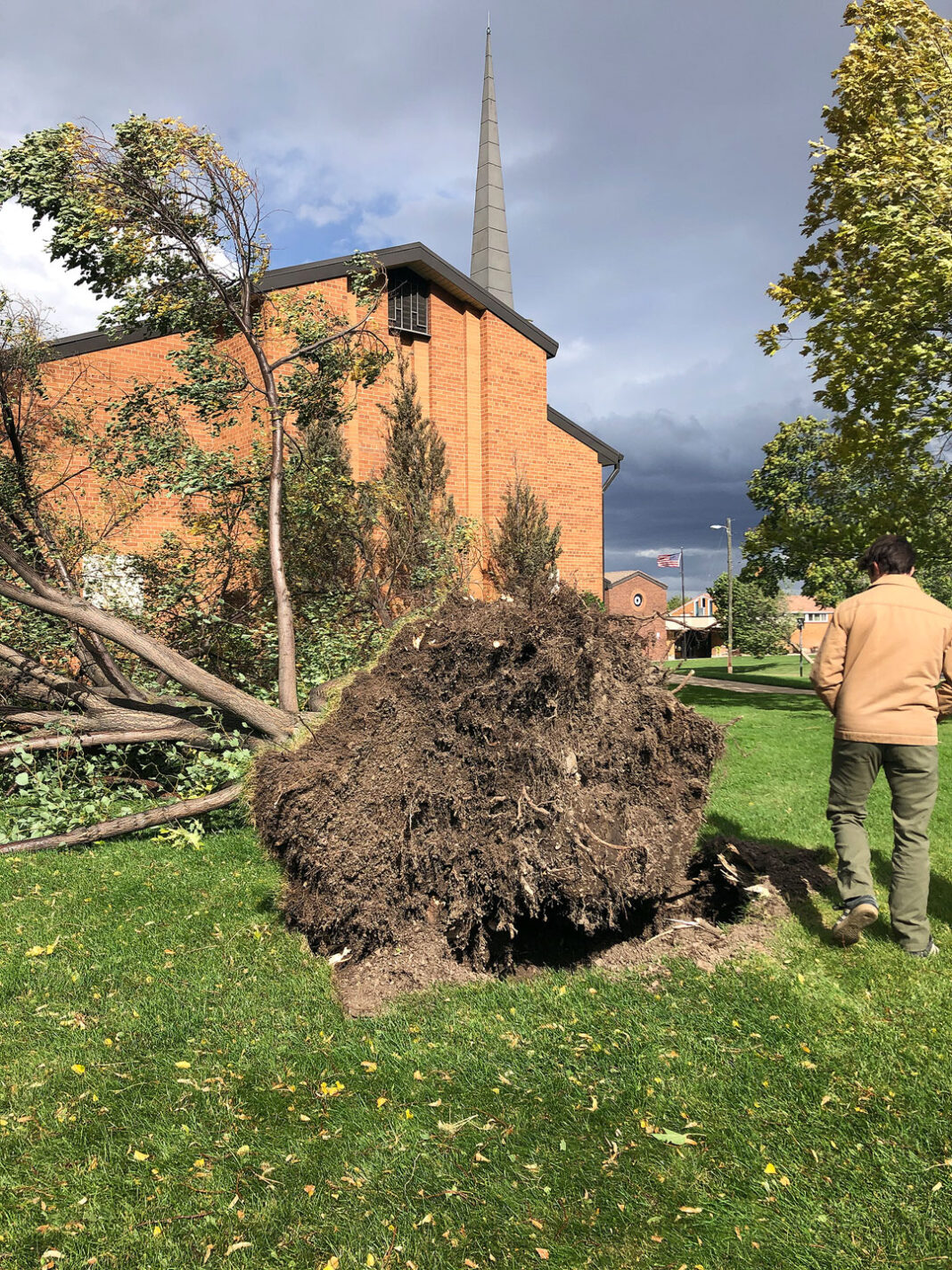 Man stands beside uprooted mature tree