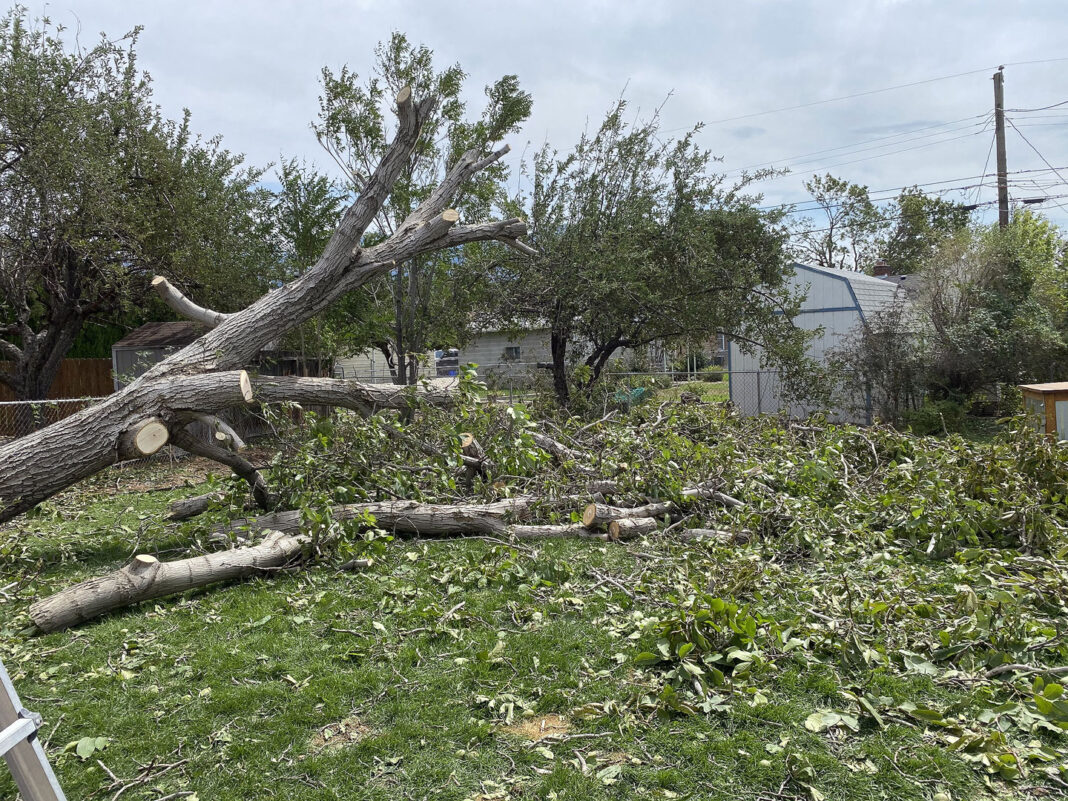 Tree debris scattered across yard