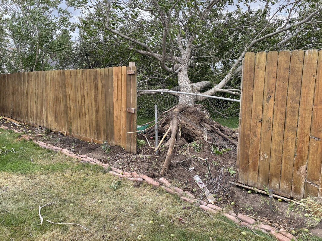 Uprooted tree damages fences