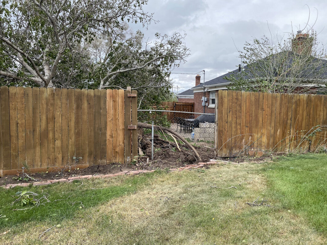 Hole in fence caused by tree root