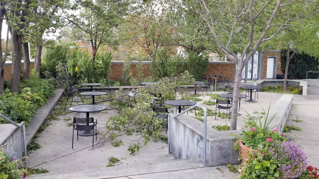 Broken tree limbs and branches in food court