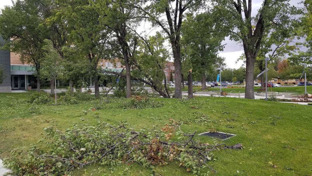 Trees damaged by high winds