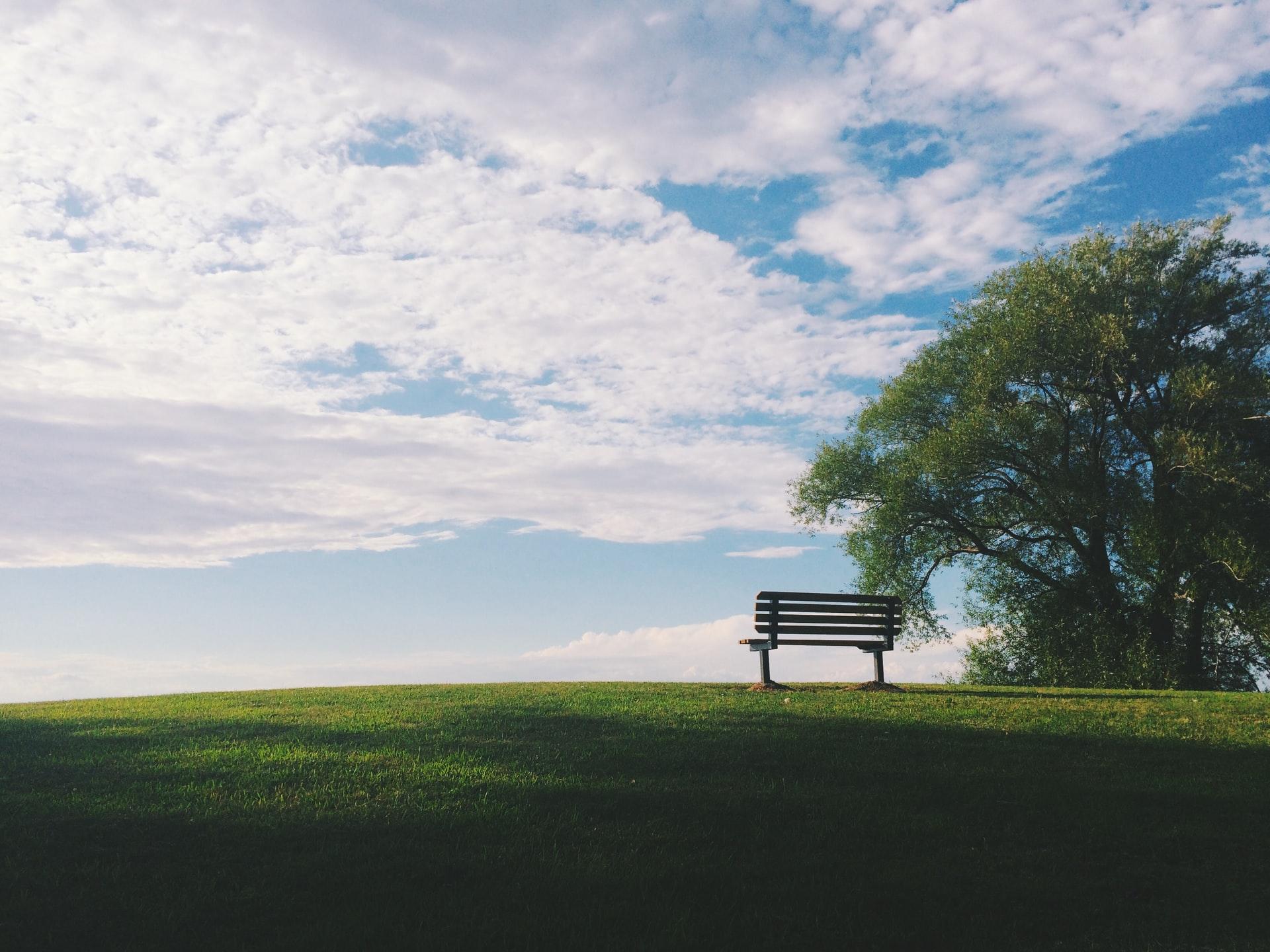 Dark wooden bench under a tree in a field