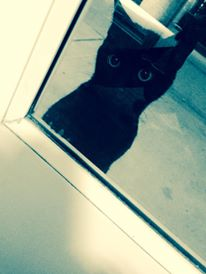 Black cat looking into Markosian Library