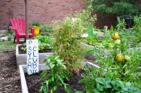 The Psych Club's plot in the SLCC Community Garden