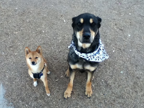 2 dogs at a dog park