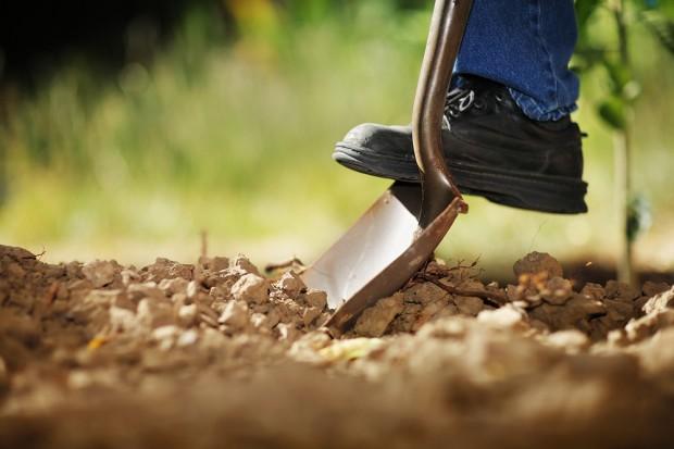 Preparing to dig