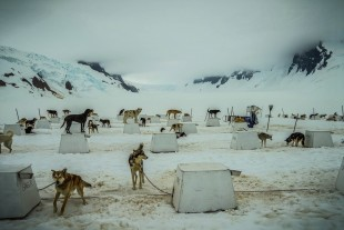 Sled dog yard