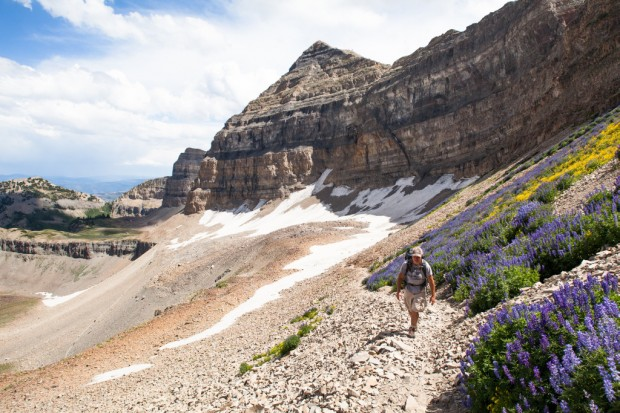 Hiking among the wildflowers at Mt. Timpanogos
